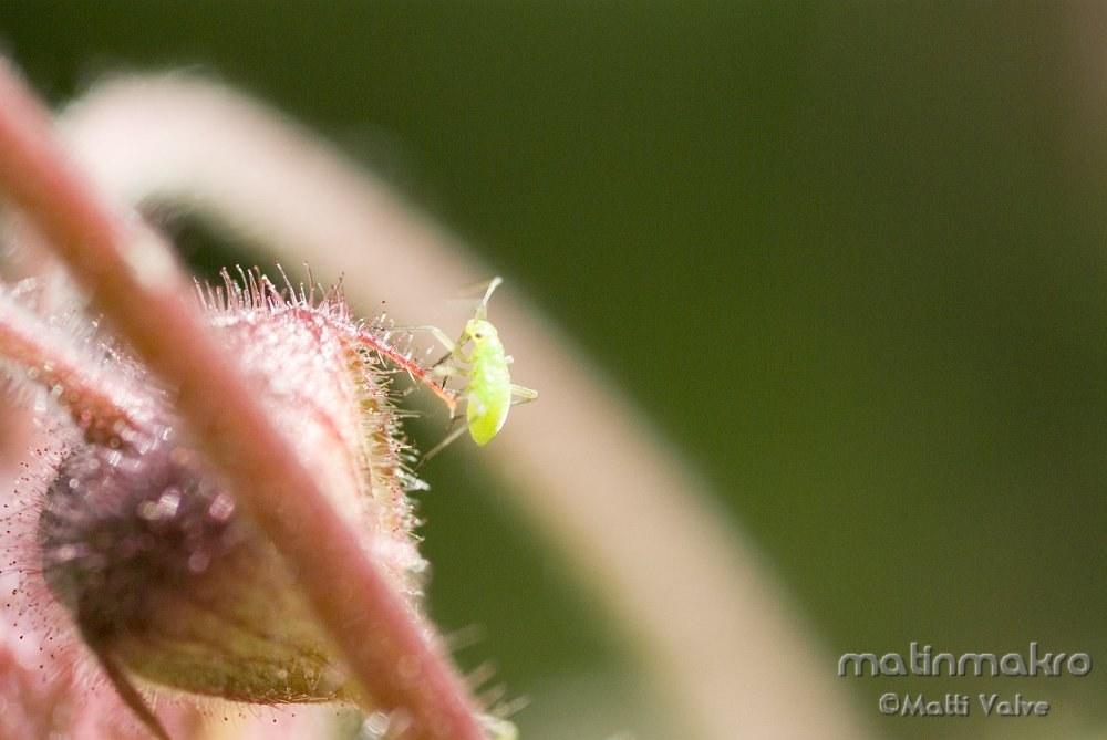 Gartenzelt 3 4 M : Hyönteiset ja hämähäkit småkryp